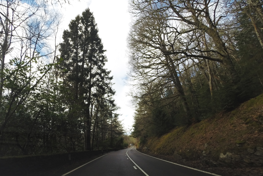 The wooded road along the drive to the Isle of Skye.