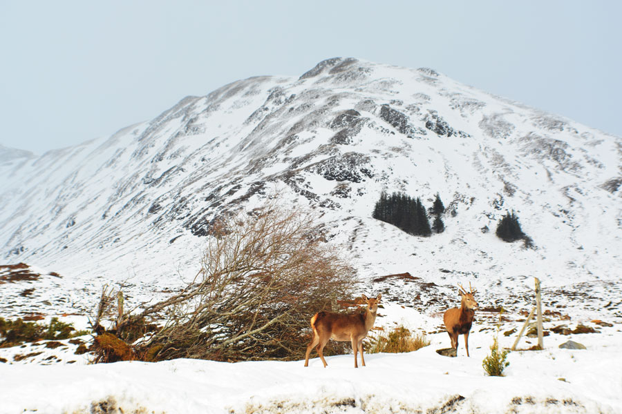 A family of deer make for a beautiful sight along the road to the Isle of Skye.
