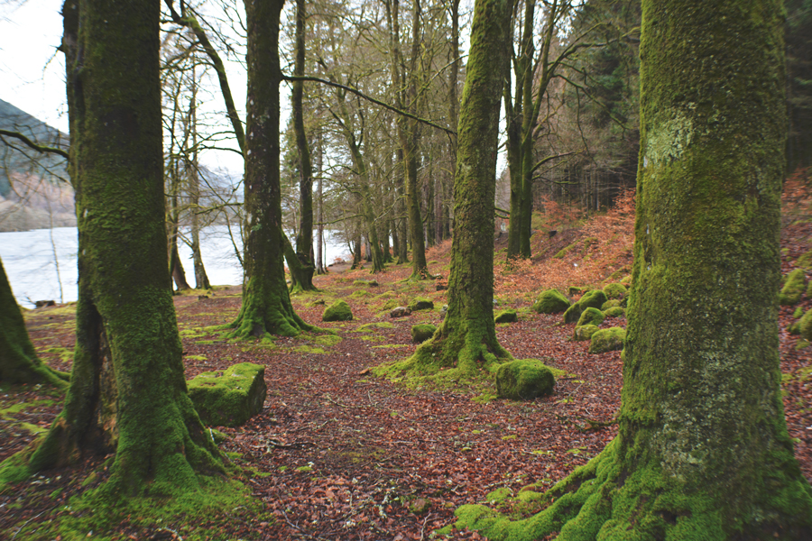 Moss covered trees on the shore of Loch Oich on a road trip to Edinburgh.
