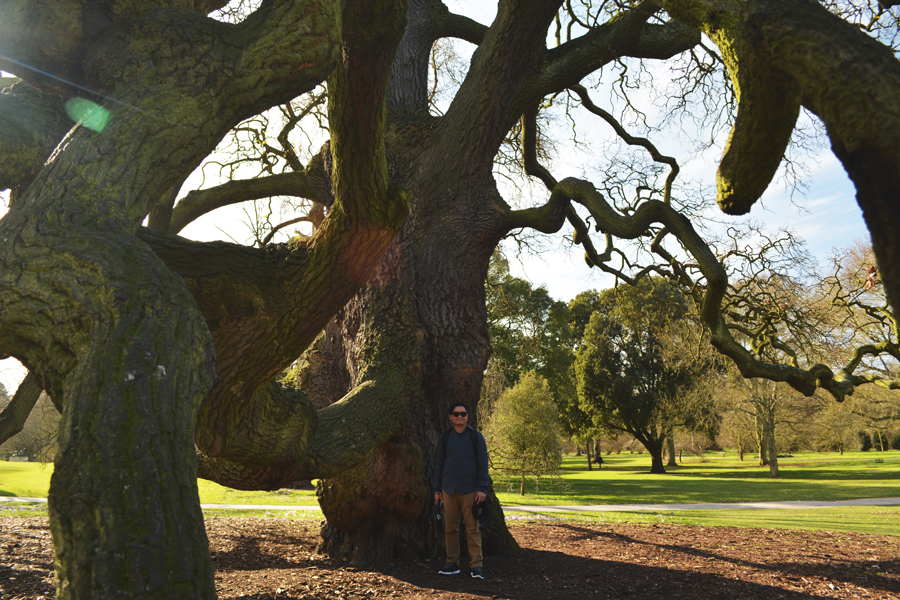 Kevin Banogon stands among the massive branches of the Lucombe Oak in the Gardens at Kew.