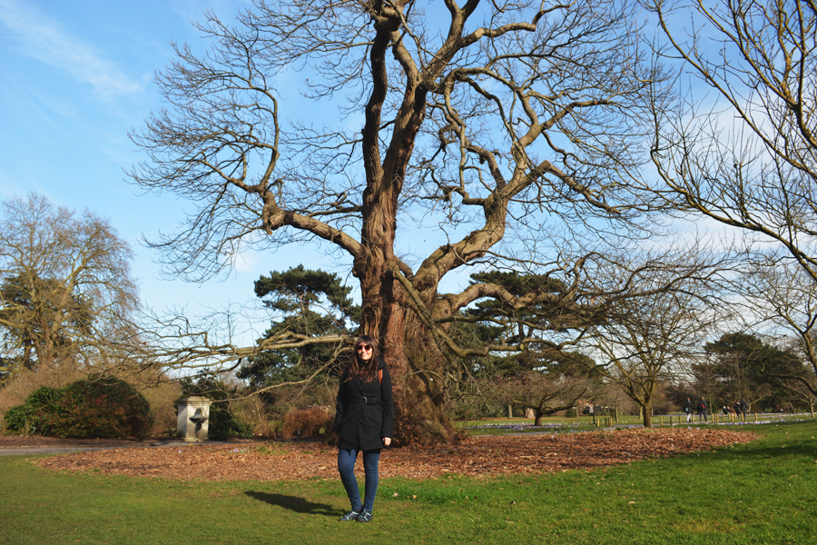 Meredith Lambert Banogon stands in front of the oldest tree in the Gardens at Kew, a 300 year old Sweet Chestnut.