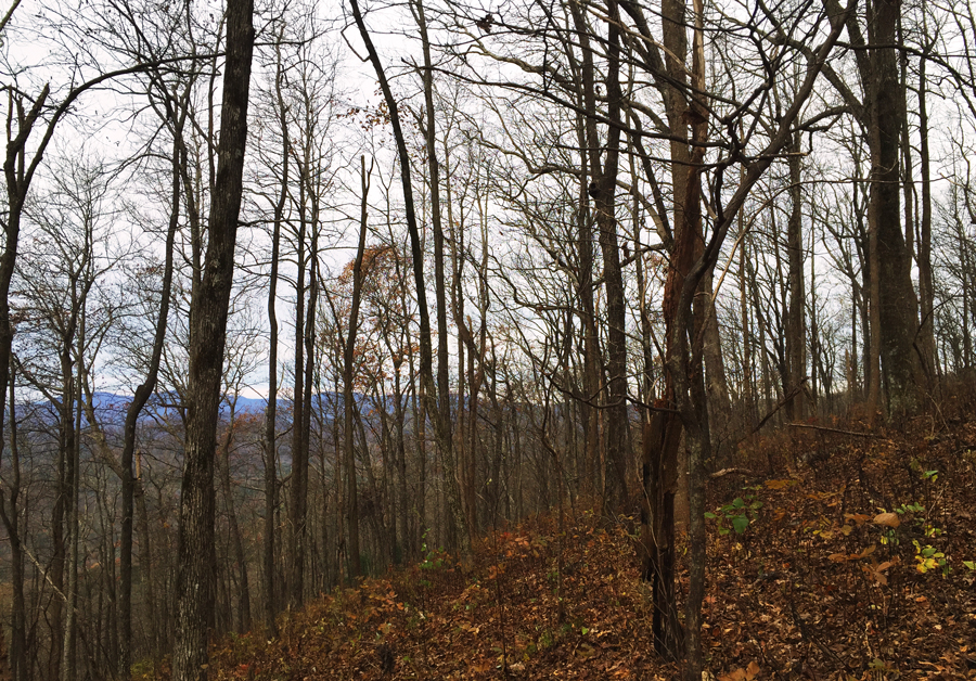 A view off the Appalachian Approach trail to Springer Mountain in the fall.
