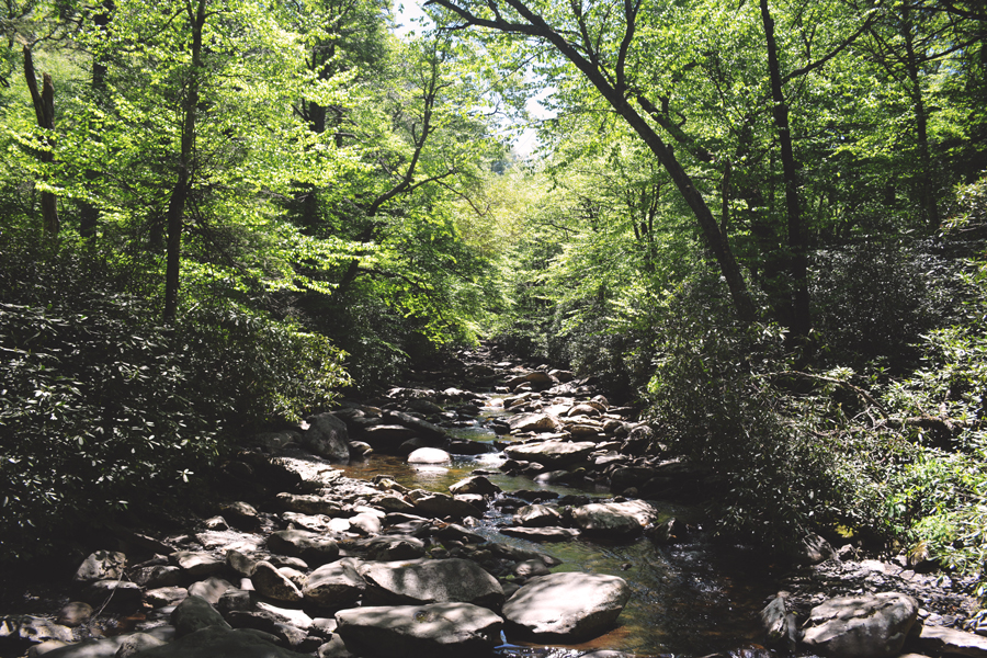 A shaded creek in the Smoky Mountains surrounded by the green of the summer months.