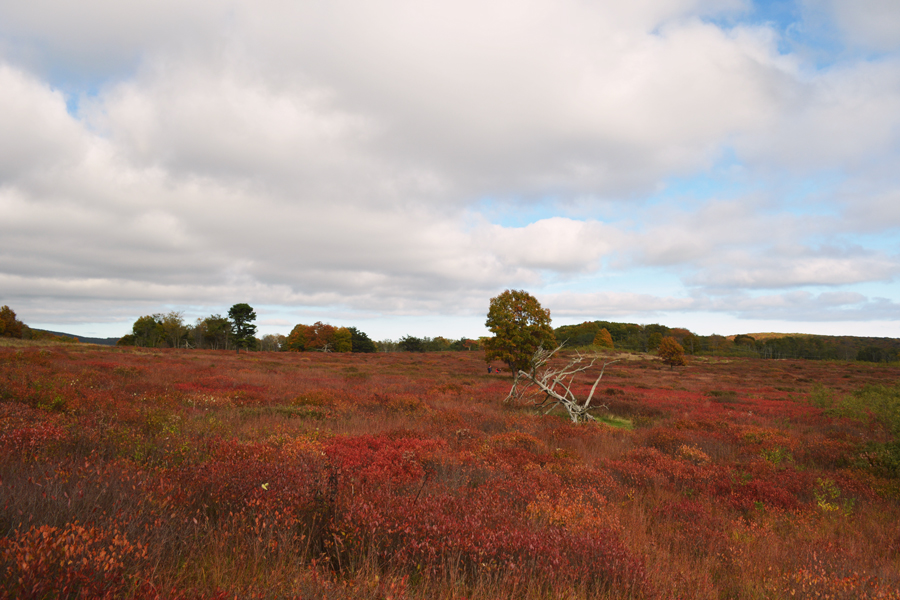 The picturesque beauty of the autumn colors of Big Meadows in Shenandoah National Park.