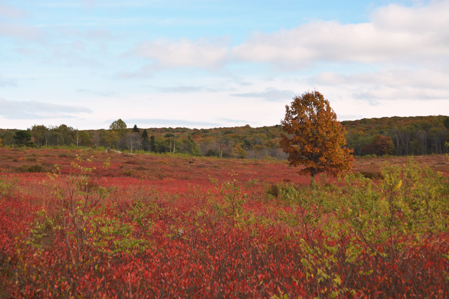 The painted fields of Big Meadows contain beautiful fall colors throughout the vegetation.