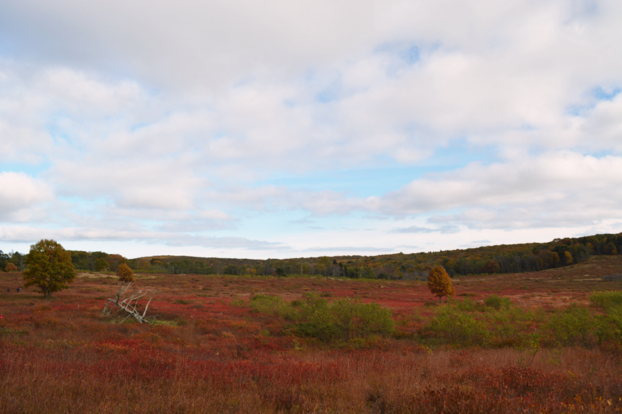 A wide view of Big Meadows during fall in Shenandoah National Park.