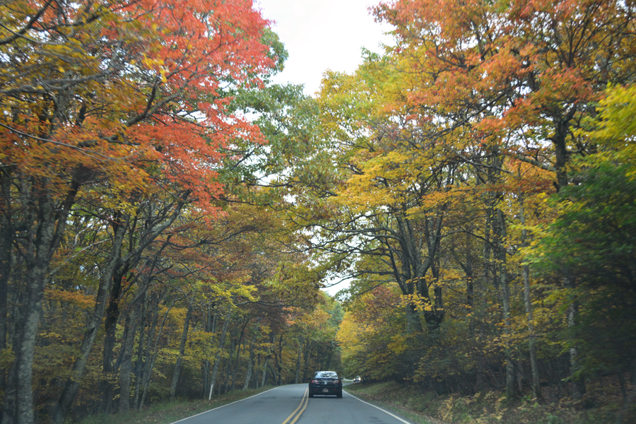 The beauty of autumn in Shenandoah National Park along Skyline Drive.