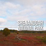 Driving through Shenandoah National Park