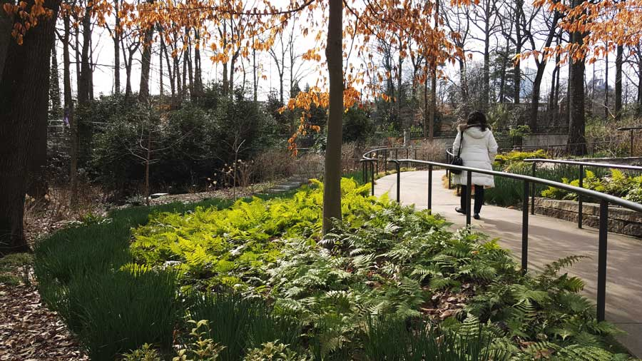 Charlene Kristen takes a winter stroll through the Atlanta Botanical Garden.