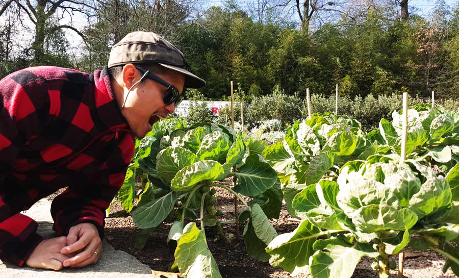 Kevin Banogon gets ready to devour the brussels sprouts inside the edible garden at the Atlanta Botanical Garden.